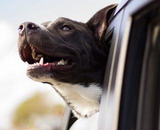 Prendre soin de la santé bucco-dentaire de son chien en 4 gestes essentiels !